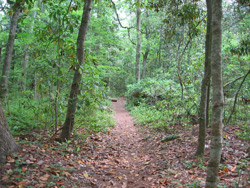 trail through the maritime forest