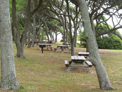 picnic tables in myrtle beach state park