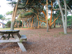 picnic tables under large live oaks